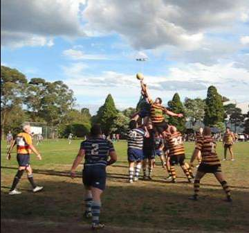 Rugby locks leaping for the ball in a lineout