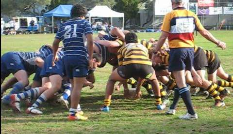 Rugby scrum-half feeds the ball into a scrum